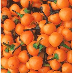 Chili Orange Kirsche - Capsicum annuum (Bio-Saatgut)